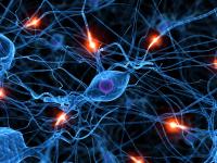 Оздоровление нервной системы