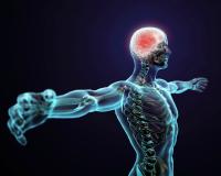 Усиление эндокринной системы