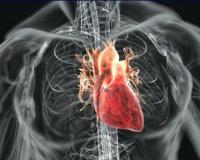 Стойкое сердце (читает автор)