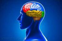 Оздоровление головного мозга (для женщин)