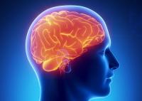 Оздоровление-восстановление головного мозга (для мужчин)