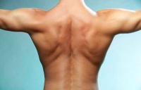 Создание нового молодого здорового спинного мозга